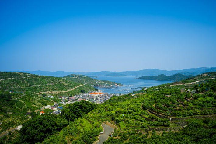 カシノキから見下ろす みかん段々畑と宇和海と佐田岬半島。風車も見えます