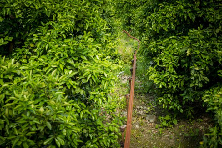 モノラックの線路がどこまで続く