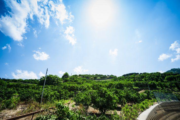 カシノキから見上げた空です